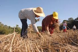 trabalhador-rural-aposentado